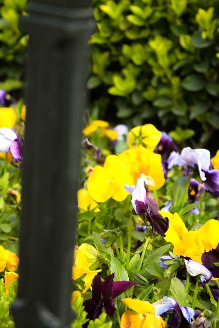 çiçekler2