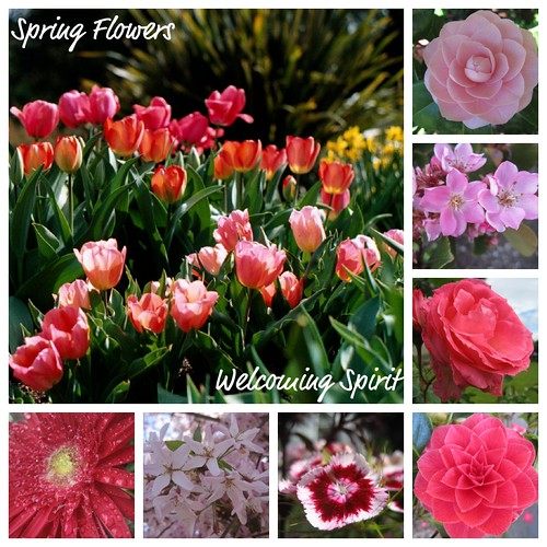pink_spring_flowers