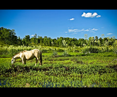 """The days run away like horses over the hill."" (""Marcio Garcia"") Tags: horse u2 landscape cavalo riograndedosul whitehorse pampas bagé potofgold marciogarcia dirtyday"
