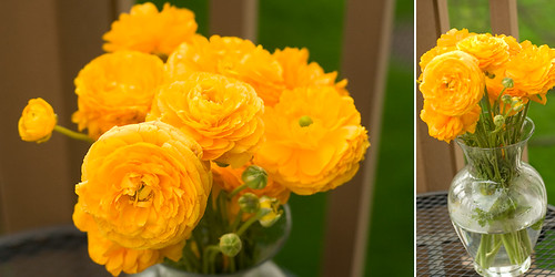 Yellow ranunculus
