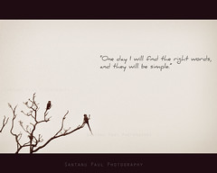 Echoes, Silence, Patience, Grace (iShaan84) Tags: monochrome birds silhouette quotes highkey
