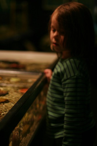 tidepool exhibit