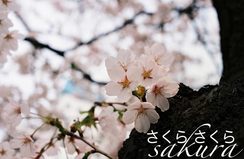 sakuratype