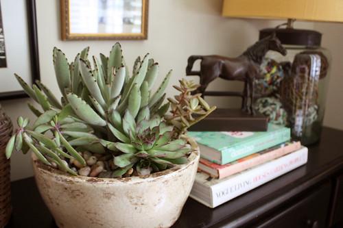first.succulent