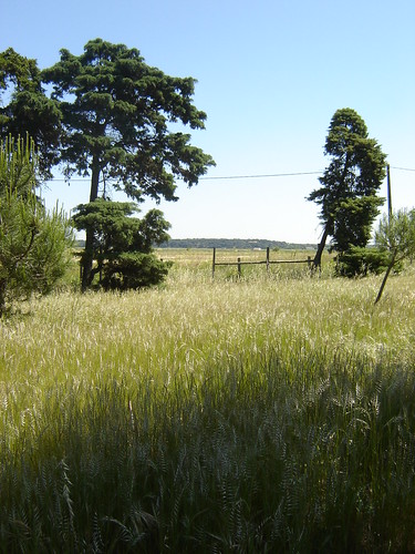 Parque Natural de Alcochete