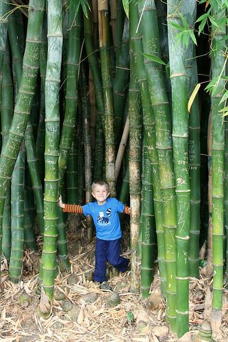 huntington bamboo