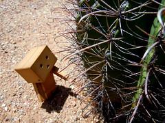 054 (mmrified) Tags: arizona cactus cute cacti toy toys robot desert tucson az plastic robots dirt cardboard kawaii barrelcactus yotsuba danbo toyrobot danboard pasticrobot