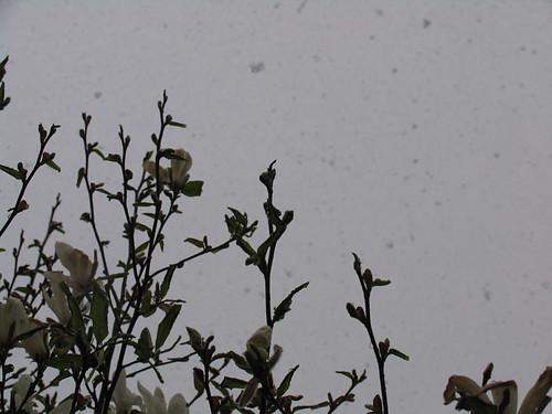 snöfall7