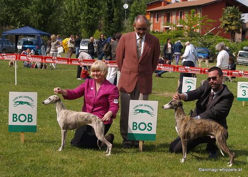 BOB Sobers Ingrid + BOS Rivarco Quintus P4293791