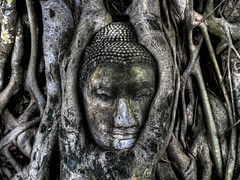Buddha in a Tree - watching the centuries pass by  ... (1982Chris911 (Thank you 3.000.000 Times)) Tags: leica old 3 tree face canon thailand high exposure dynamic head buddha christian sri thai mysterious 5d meditation wat range dri hdr highdynamicrange hdri phra ayutthaya digilux watphrasrisanphet canoneos5d photomatix lglass canonphotography sanphet canonllens hdrphotography hdrpictures canoneos5dmarkii canon5dmkii 5dmarkii canon5dmark2 5dmark2 canon5dmarkii eos5dmarkii krieglsteiner headinatree buddhafacetree 1982chris911 christiankrieglsteiner 192chris911 christiankrieglsteinerphotography