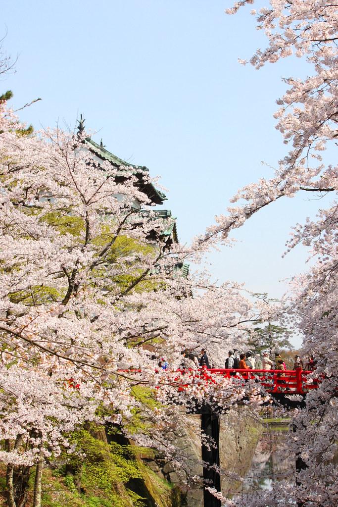 Hirosaki Park Sakura (12)