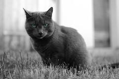 Sehe ich aus wie eine Maus??? (mg16373) Tags: cat 35mm kater ae 3514 umc weitwinkel samyang as d700 walimexpro