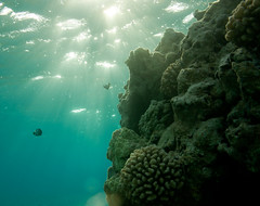 Sunrise on the coral reef, Shark Island, French Frigate Shoals
