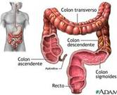intestino_grueso