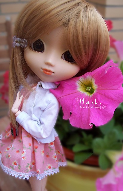 Hachi Pink | Pullip Nina