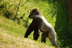 Last Import-40 (Rommert) Tags: rotterdam blijdorp isabella chantal dierentuin