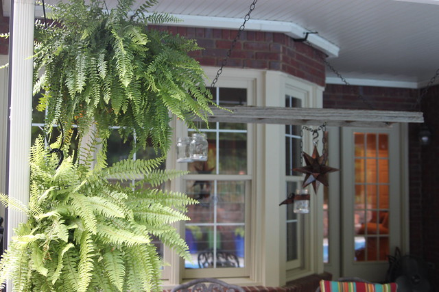 ferns on covered patio