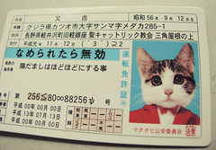 I've become a cat. (ohpapercut) Tags: cute japan cat funny card     ohpapercut