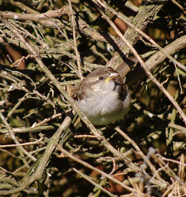 4th Avenue June Sparrows 06