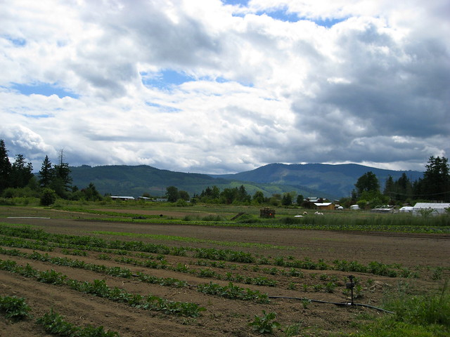 Potato Rows & Mountains
