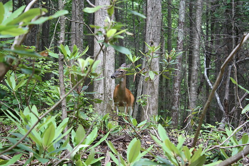 A deer!