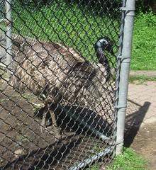 high park emu