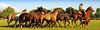 La madrina oscura (Eduardo Amorim) Tags: horses horse dog chien cão southamerica argentina cane criollo caballo cheval caballos perro hund cachorro cavalos pferde herd cavalli cavallo cavalo gauchos pferd pampa chevaux gaucho sudamerica 馬 américadosul campero amériquedusud provinciadebuenosaires лошадь gaúchos 马 sudamérica sanantoniodeareco suramérica américadelsur areco südamerika gregge crioulo troupeau caballoscriollos herde criollos حصان tropillas pampaargentina camperos americadelsud tropilhas tropilla crioulos cavalocrioulo americameridionale holidaysvacanzeurlaub tropilha caballocriollo campeiros campeiro eduardoamorim cavaloscrioulos iayayam yamaiay pampaargentino homerwashere
