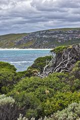 Boranup, Western Australia