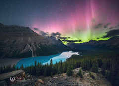 Peyto Lake under Northern Lights (Evan.li) Tags: peyto lake under northern lights
