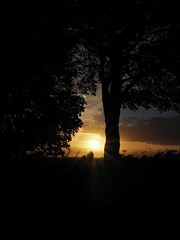 Sunset (David Ward4) Tags: sunset coxmoor tree olympus olympusomdem10ii kirkby kirkbyinashfield