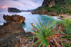 Fresh (nGkU Li) Tags: ngkuli nature indonesia seascape sunrise slowshutter fujifilm flickrtravelaward xpro2 outdoor rock water ngerumput