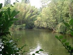 Parque da Curia (CCDR - Centro / Região Centro de Portugal) Tags: anadia parquenatural curia patrimonionatural lago jardins 010312 ic010312 projectoimagensdocentro incentro0103