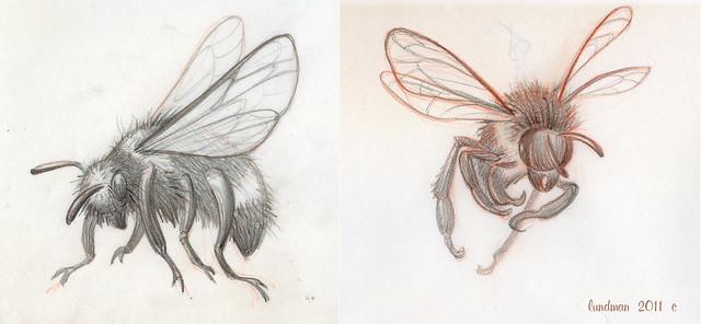 Lundman-Bees003