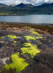 Lichen (vathiman) Tags: mountains scotland highlands rocks lichen lowtide loch torridon