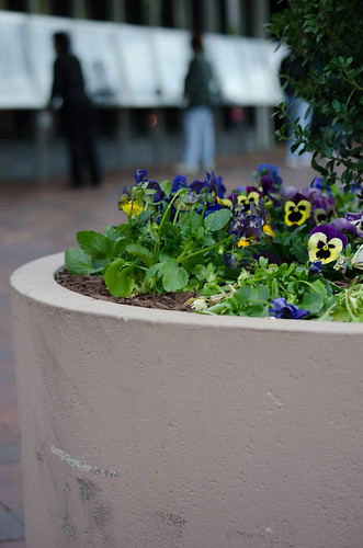 Flowers outside the Newseum