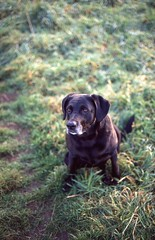 Buddy (Jorkew) Tags: sunset dog pet film sunshine canon fuji ae1 slide 200 expired sensia leeuwarden programm