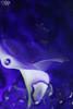 calla-6 (Soniett@) Tags: il mio fiore preferito