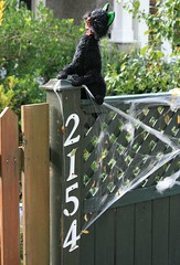 2154 Black Cat (~ Blu ~) Tags: cat fence blu web numbers 2154