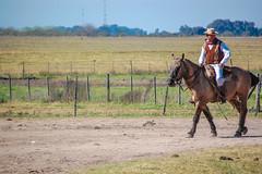 (Pablo___) Tags: horses horse southamerica caballo cheval caballos farm estancia cavalos pferde cavalli cavallo pampa hacienda fazenda campanha chevaux amricadosul amriquedusud sudamrica suramrica amricadelsur sdamerika estncia americadelsud americameridionale campeiros