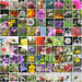 Flickr-flowers.800