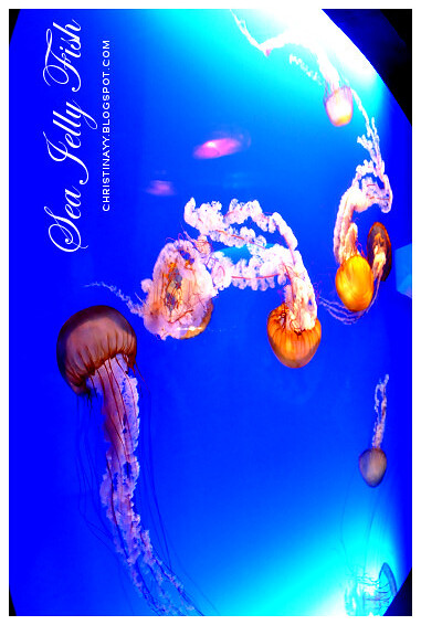Hong Kong Trip Day 3: Ocean Park (海洋公园) Sea Jelly Fish