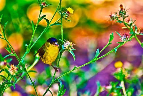 Bird Bird Bird Have You Heard Of The Bird by hbmike2000