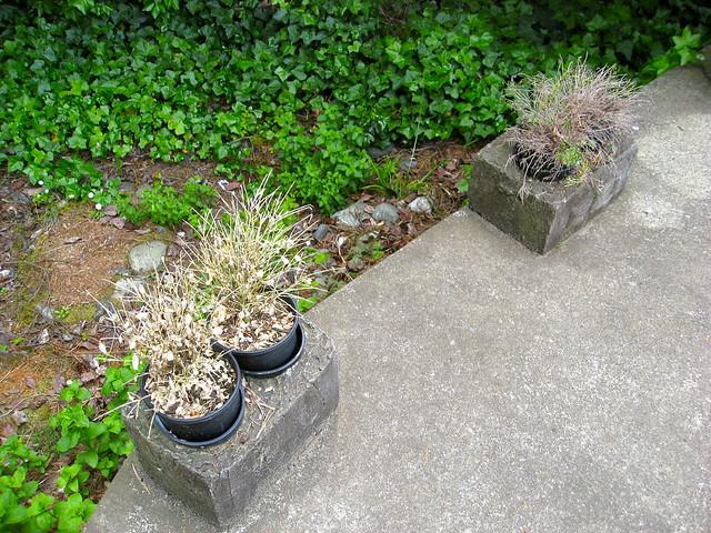 Dead Herb Plants 01