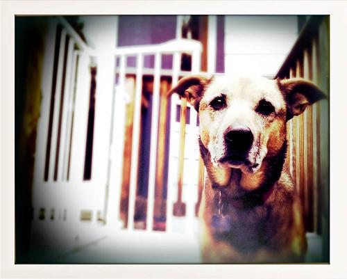 Cali Dog: 35:365 #TeamPhotoBlog by dhgatsby
