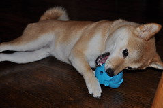 Dexter the Elephant Toy