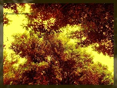 .[Explore] (Beautiful flower*) Tags: trees sky sun flower tree fall papers                     treetreespapersfallskysunflowerbeautifulallcryingpast whynothinkinpresentbeforethatbecomespast