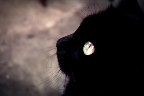 Luna,