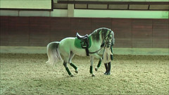 "Lipizzaner Dressage • <a style=""font-size:0.8em;"" href=""http://www.flickr.com/photos/64637277@N07/5890341303/"" target=""_blank"">View on Flickr</a>"