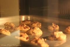 cookies (Qairawan Al.H) Tags: rahaf alhajeri