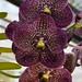 The Royal Botanical Garden Peradeniya Kandy  Sri Lanka